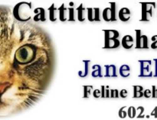 Cattitude Feline Behavior